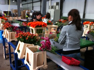Flower packing tables and conveyor